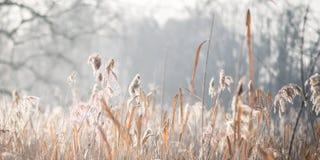 утро пущи морозное Стоковое Изображение RF