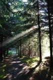 утро пущи осени Стоковые Фотографии RF