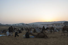 Утро сафари верблюда Стоковое Изображение RF