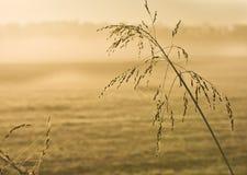утро света травы задней части предыдущее высокорослое Стоковая Фотография