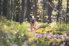 Утро собаки Стоковые Фото