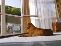 утро солнечное Стоковая Фотография