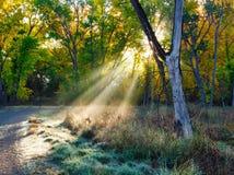 Утро Солнце через листья осени стоковое фото