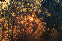 Утро, солнце, восход солнца, Стоковая Фотография