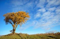 Утро Солнце светя на дереве осенью Стоковые Изображения