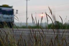 Утро Солнце цветков Стоковая Фотография