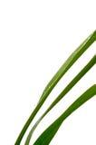 утро травы росы лезвий Стоковые Изображения