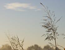 утро травы росы предыдущее высокорослое Стоковая Фотография