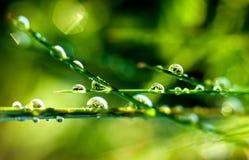 утро травы росы предыдущее Стоковое Фото
