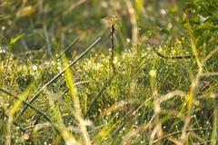 утро травы росы свежее Стоковая Фотография RF