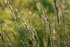 утро травы росы Стоковые Изображения