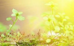 утро травы сада солнечное Стоковые Фотографии RF