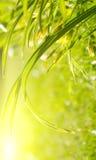 утро травы сада солнечное Стоковое Изображение
