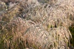 Утро Травы хлопьев в росе Стоковое фото RF