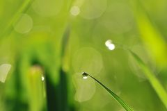 утро травы Стоковые Изображения