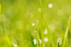 утро травы Стоковое фото RF