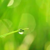 утро травы Стоковое Изображение RF