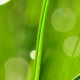 утро травы Стоковое Фото