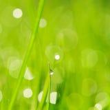 утро травы Стоковая Фотография