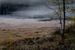 утро тумана тонизировало версию Стоковое Изображение RF