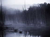 утро тумана Стоковое Изображение
