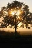 утро тумана Стоковые Изображения