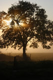 утро тумана Стоковое фото RF