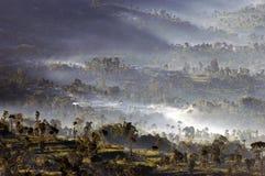 утро тумана beautifull Стоковые Фотографии RF