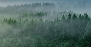 Утро туманное в taiga Стоковое фото RF