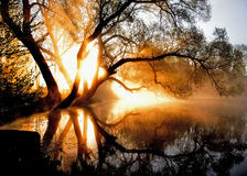 Утро, туман и солнце Стоковое фото RF