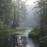 утро лужка тумана над водой Стоковое Изображение RF