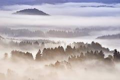 утро лужка тумана над водой Стоковое Фото