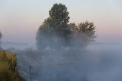 утро лужка тумана над водой Стоковые Фото