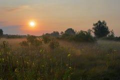 утро лужка тумана над водой Стоковые Изображения