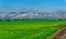 утро лужка тумана над водой Стоковые Фотографии RF
