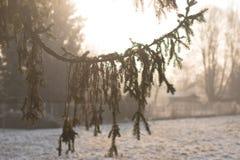 утро фермы морозное Стоковые Фото