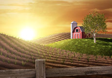утро фермы Стоковые Фотографии RF