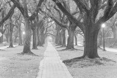 Утро Хьюстон тоннеля дуба туманное, Техас, США Чернота и whi Стоковые Изображения RF