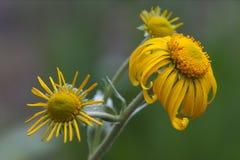 утро цветка Стоковое Изображение