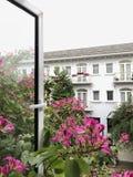 Утро цветка Windows свежее Стоковые Изображения