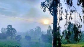 Утро Стоковое Изображение RF