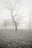 утро 2 туманов Стоковое Изображение RF