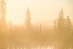 утро Стоковое фото RF