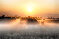 Утро Стоковые Изображения
