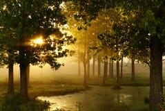 утро Стоковые Изображения RF