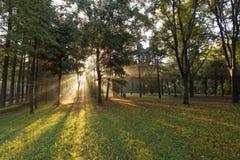 Утро Forest Park стоковые изображения rf