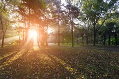 Утро Forest Park стоковая фотография rf
