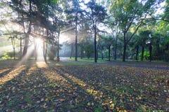 Утро Forest Park стоковые изображения