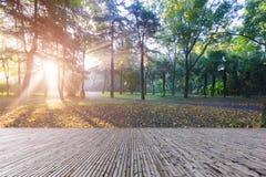 Утро Forest Park стоковое изображение