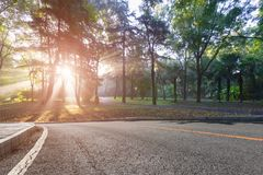 Утро Forest Park стоковое фото